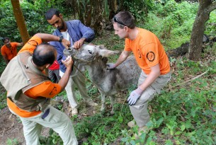 Our vet Sergio Vasquez administers deworming drugs to three year old donkey 'Russi'.