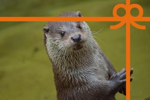 eCard: I Otterly Love You