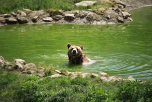 10 Facts about Bears