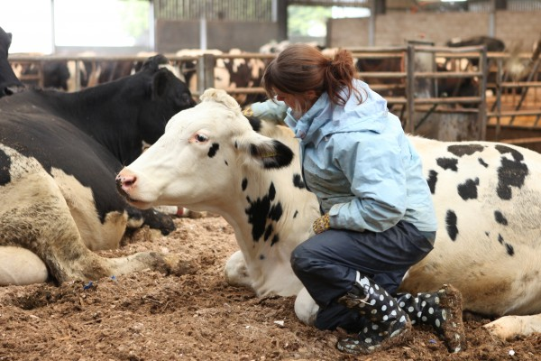 World Animal Protection's science team carried out research at Bolton Park Farm, to assess sentience in dairy cattle.