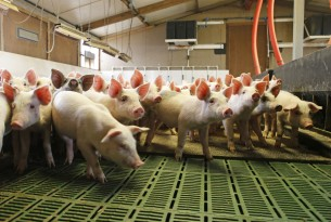 We welcome European Parliament committee's decision to curb farm animal antibiotic use
