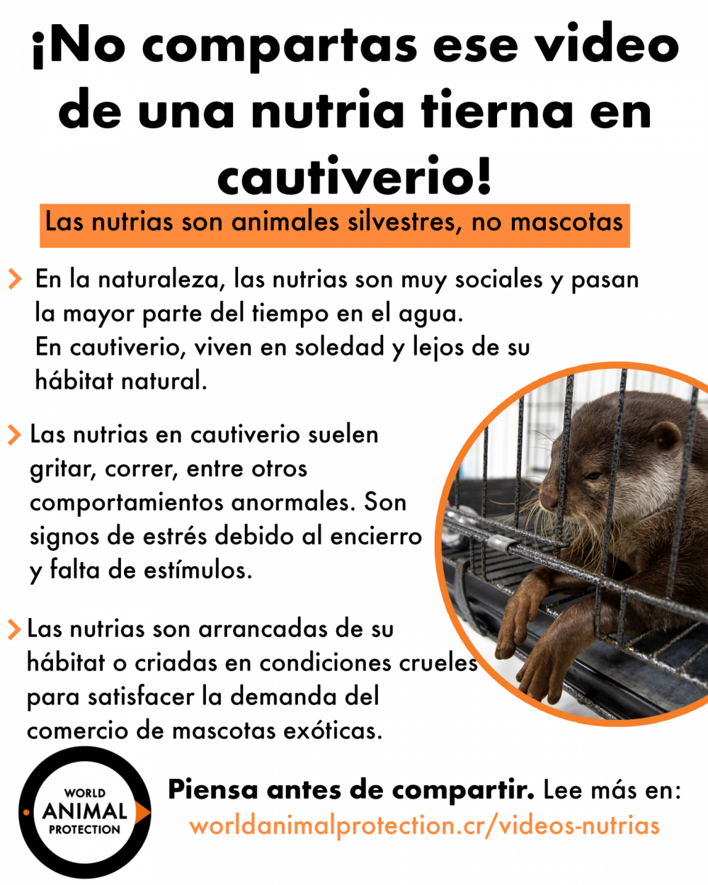 video nutrias mascota