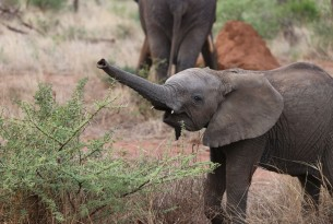 CITES: Ban on sending wild African baby elephants to zoos and circuses