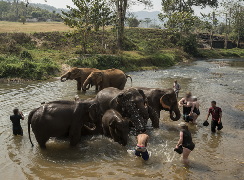 Tourists bathing elephants at a venue in Thailand