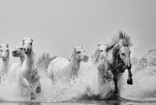 Ejaz Khan Earth Photography - Wild Horses - World Animal Protection