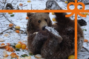 eCard: Feed a hungry bear for a month