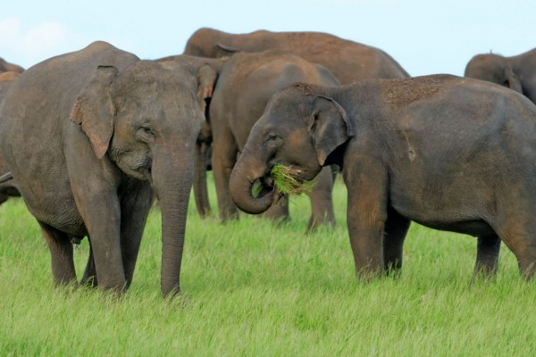Elephants at national park in Sri Lanka - World Animal Protection - Wildlife. Not entertainers