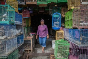 A woman walks through caged birds for sale at the Denpasar Bird Market in Bali, Indonesia