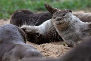 Victory for otters, tortoises, elephants and many more at-risk animals
