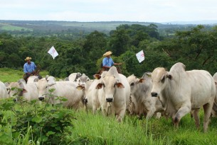 animals in farming