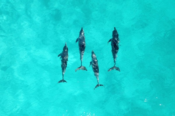 Pictured: Dolphins belong in the wild. Credit Line: Courtnie Tosana