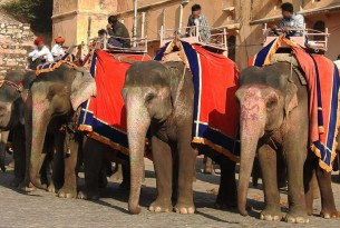 Victory for 20 sick elephants at Amer Fort