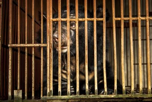 Vietnam's National Bear Week highlights importance of ending the country's cruel bear bile industry