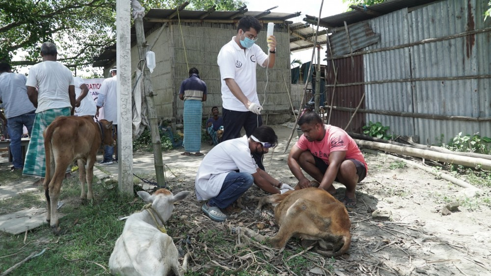 assam flood  animals in disasters