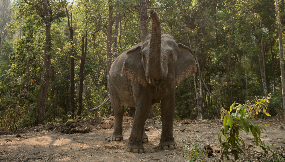 A new resident at our Happy Elephant Care Valley