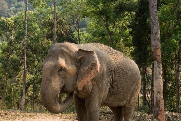 Admiring wildlife from afar: Thai venue pioneers elephant-friendly transition