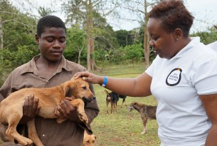 Animals in communities: We work with communities around the world to help them protect their pets and working animals