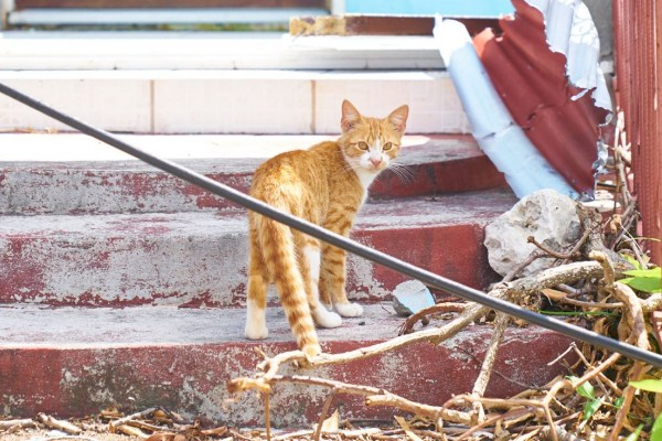 Cat in Barbuda - World Animal Protection - Disaster management