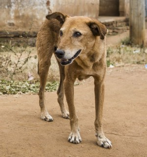 Street dogs needs your help