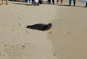 Three survivor seal pups released into the ocean