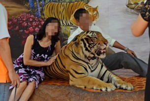 Exposing the cruelty behind tiger selfies