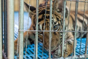World animal protection Thailand, Animals in the wild