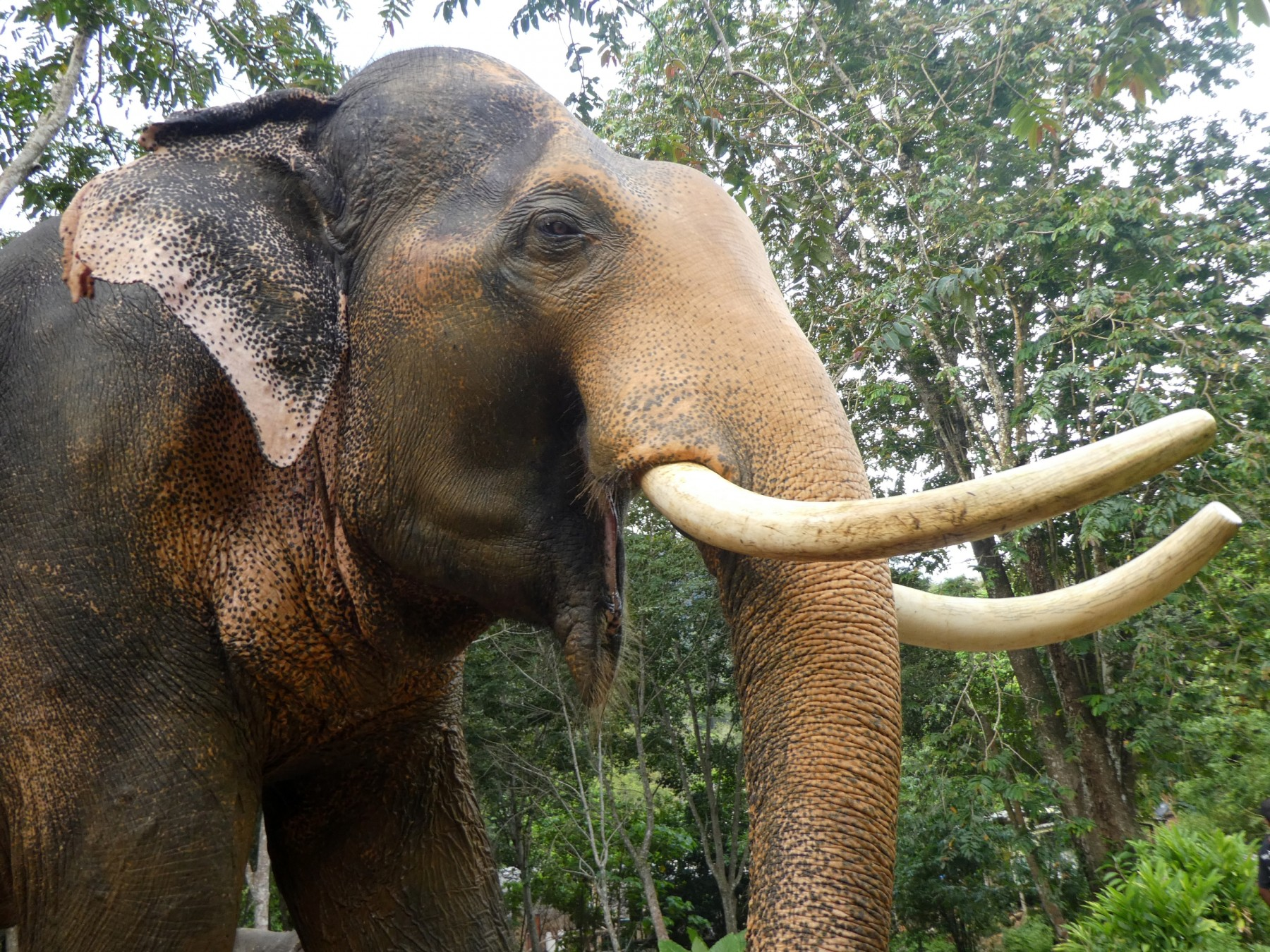 Elephant at high welfare venue in Koh Lanta, Thailand - World Animal Protection
