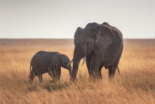 An elephant and her calf