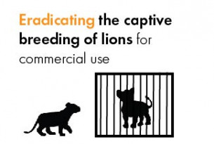 Eradicating the captive breeding of lions for commercial use.