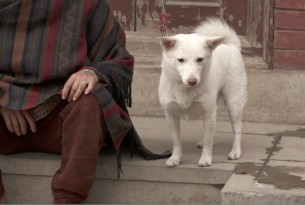 A dog with his owner in the aftermath of Nepal's worst earthquake in 80 years, Kathmandu.