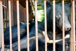 A bear in a cage