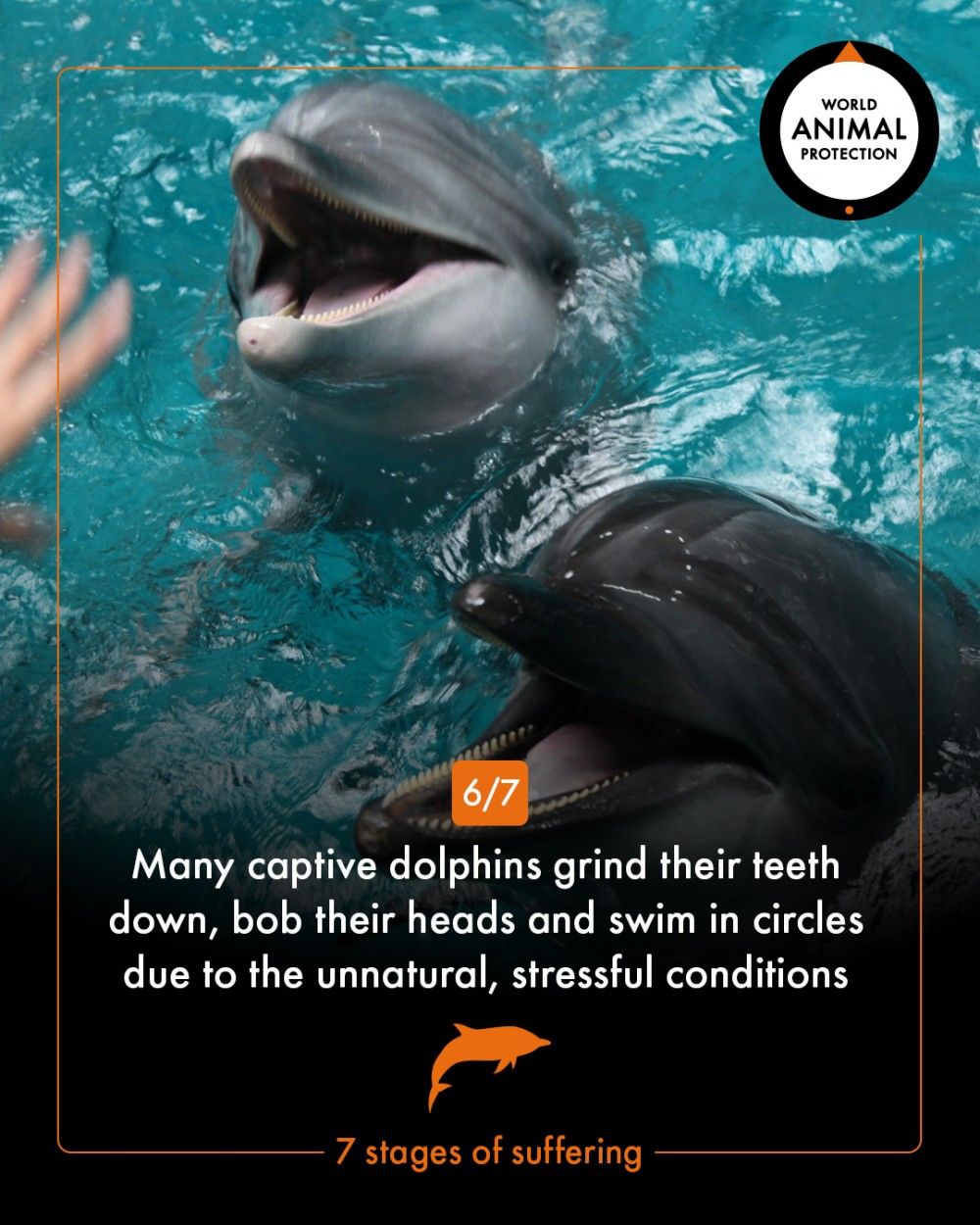 7 stages of dolphin suffering - World Animal Protection