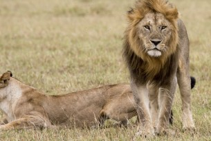 It's just one lion: so why the public outrage?