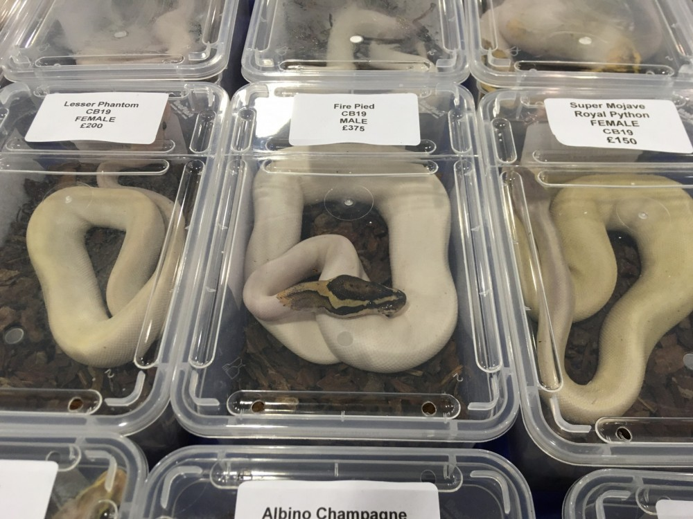 Snakes on display