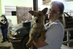 In January 2019, a World Animal Protection team deployed following a dam collapse in Brumadinho, Brazil