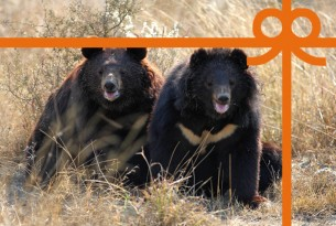 eCard: Heal two bears