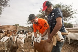World Animal Protection vet JC Murillo helping local farmers in Chile after flooding
