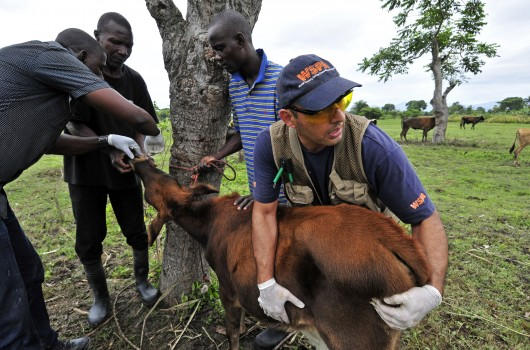 World Animal Protection vet treats animal in disaster