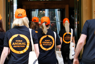World Animal Protection team members walking into the Expedia office in Sydney