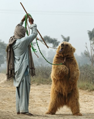 Bear dancing in Pakistan
