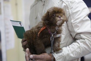 A small fluffy brown dog sits in their owner's hands. It's wearing an orange bandana around its neck.