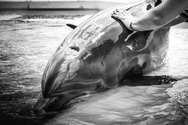 A dolphin in captivity. World Animal Protection
