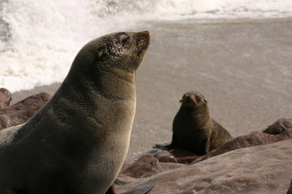 Seal pup and mother on rocks. Credit: WSPA/Claire Bass