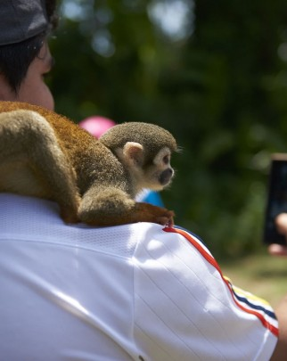 Tourist taking a photo with a squirrel monkey in the Amazon - Wildlife. Not entertainers - World Animal Protection