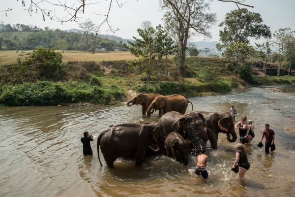 Tourists bathing with elephants