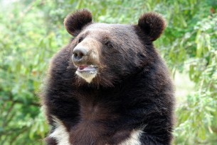Pakistan bear sanctuary will be extended