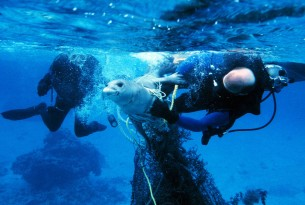 Seal trapped in ghost fishing gear is untangled by divers