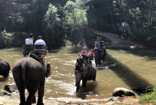 Elephants are not tourist attractions