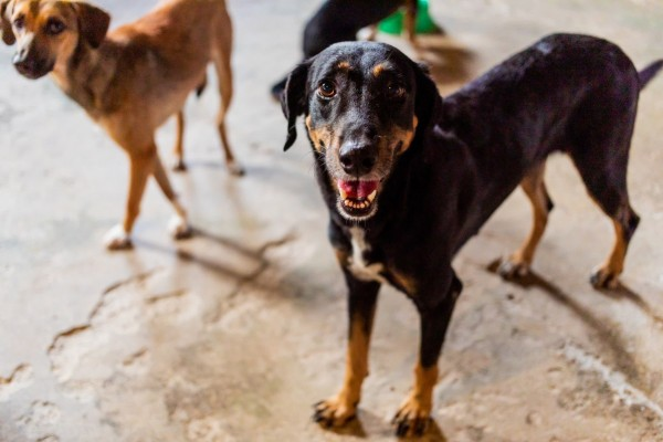 A happy dog in a shelter in Brazil.