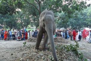 elephants in wild